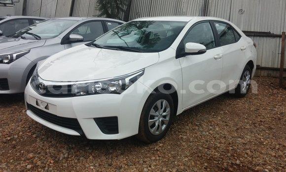 Buy New Toyota Corolla White Car in Kigali in Rwanda