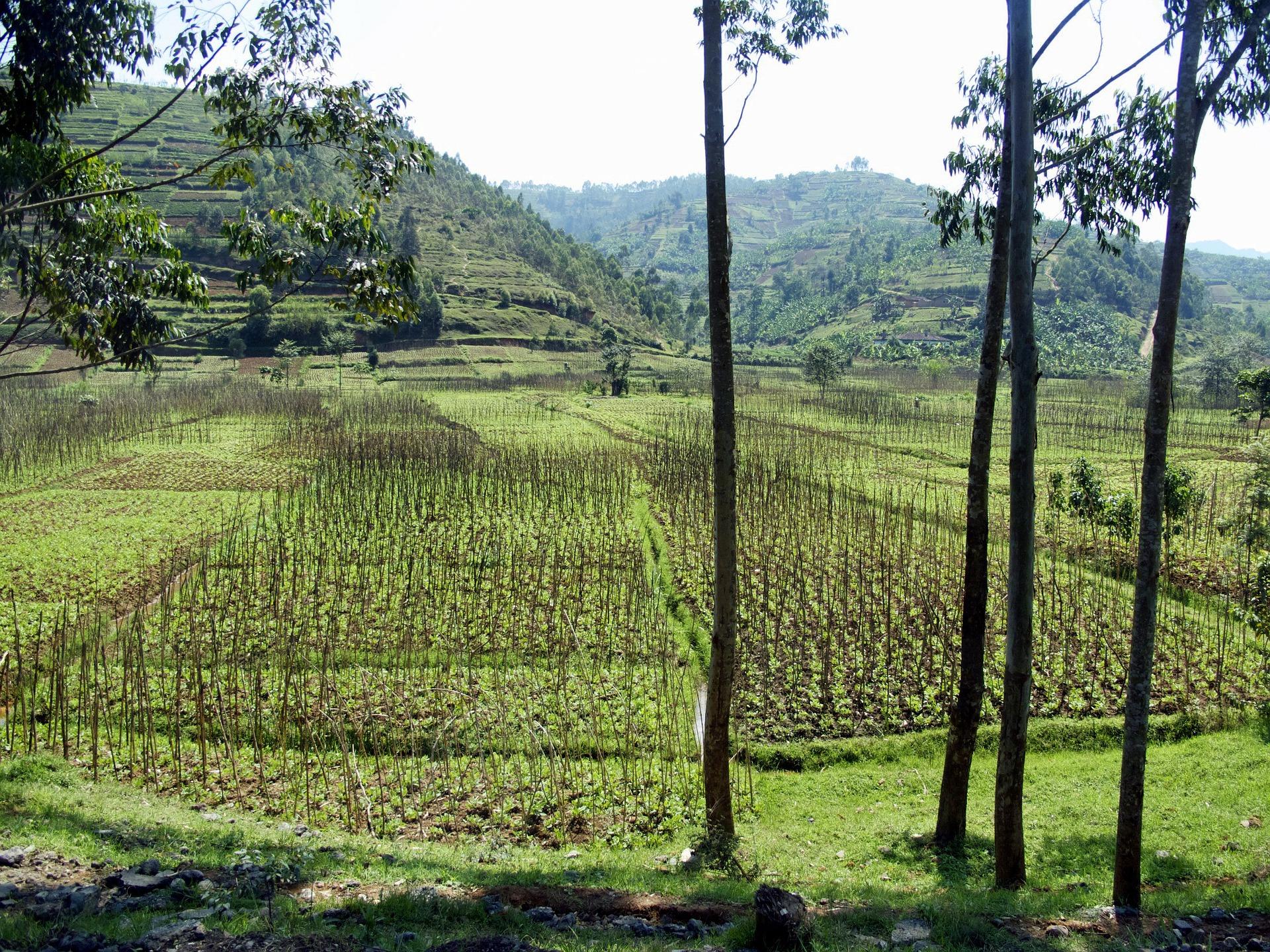 Rwanda 123407 1920